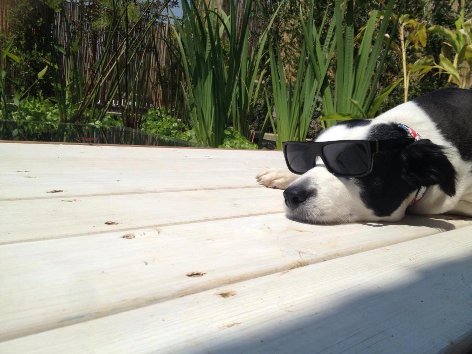 יום הכלב הבינלאומי אצלנו בסנטר!