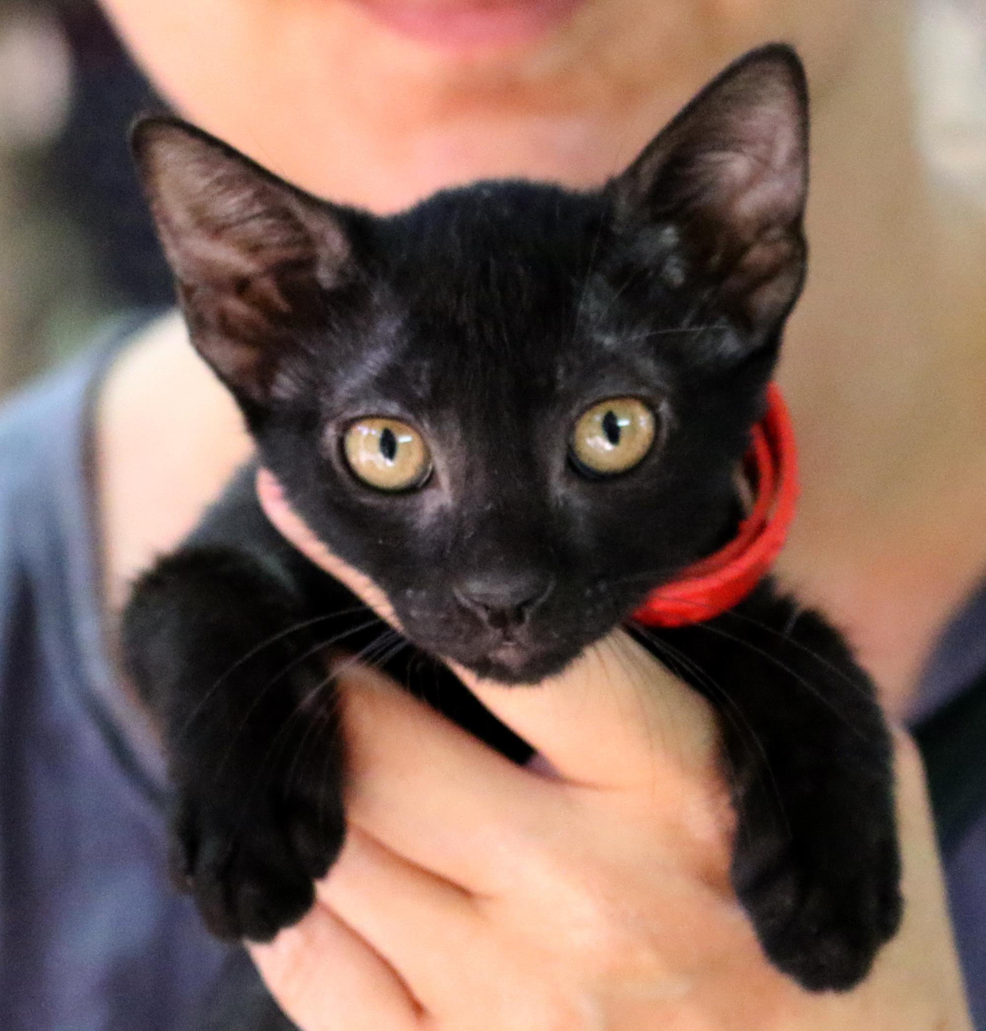 50 גוונים של שחור – יום אימוץ חתולים שחורים